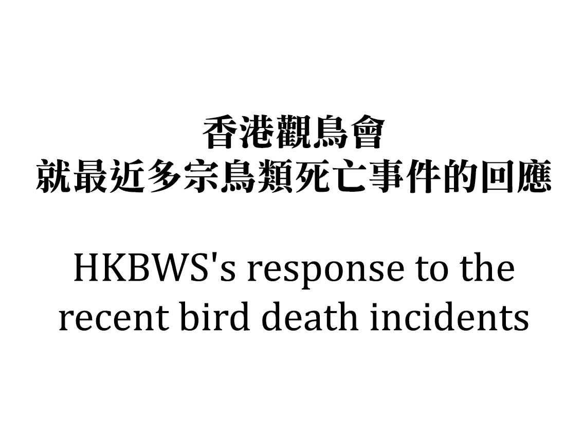HKBWS's response to the recent bird death incidents