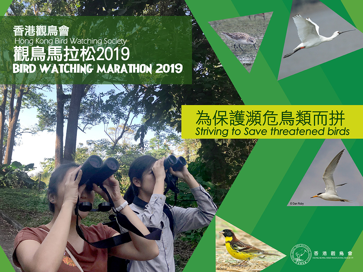 觀鳥馬拉松 2019 Bird Watching Marathon